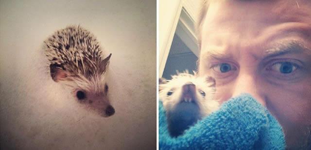 Após perder um dente, o ouriço Norman se tornou uma celebridade da Internet