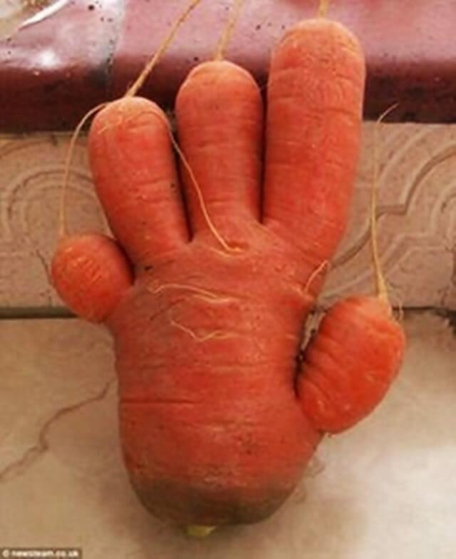14 Vegetais que se esqueceram de ser apenas vegetais
