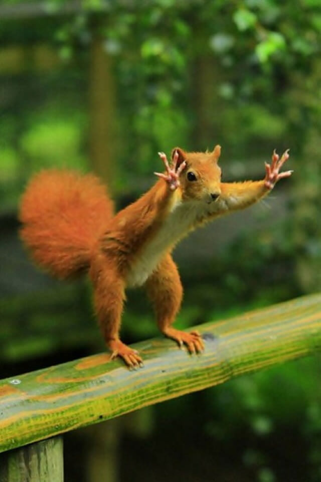 25 Fotos perfeitas de animais tiradas no momento exato