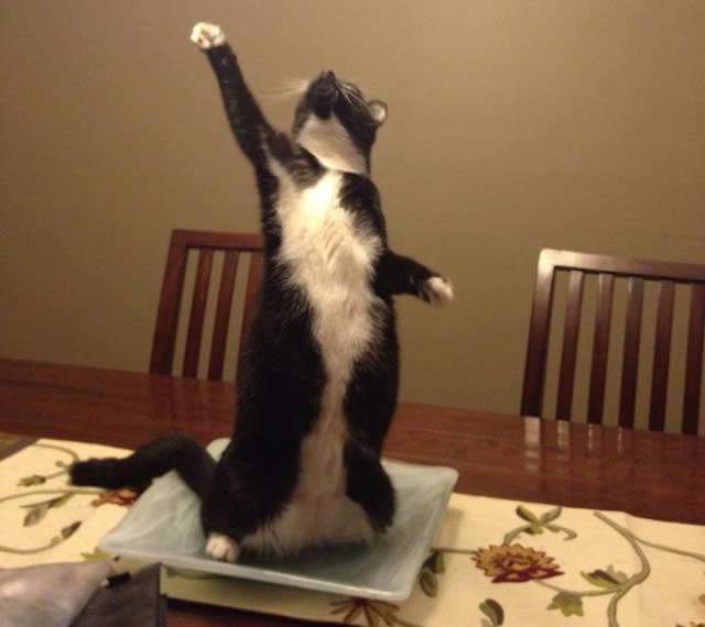 28 Gatos que definitivamente dominam a arte de ficar em pé