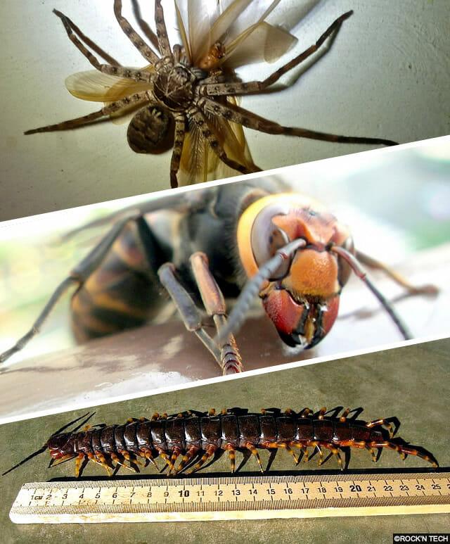 insetos-japoneses-terriveis