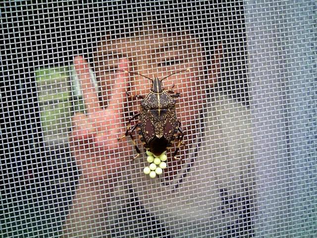 insetos-japoneses-terriveis_9