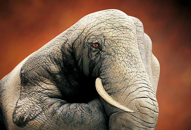 18 Fotos incríveis de pinturas corporais representando animais