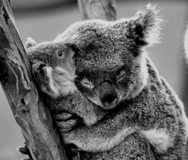 Os 25 abraços de bichos mais fofos que você já viu