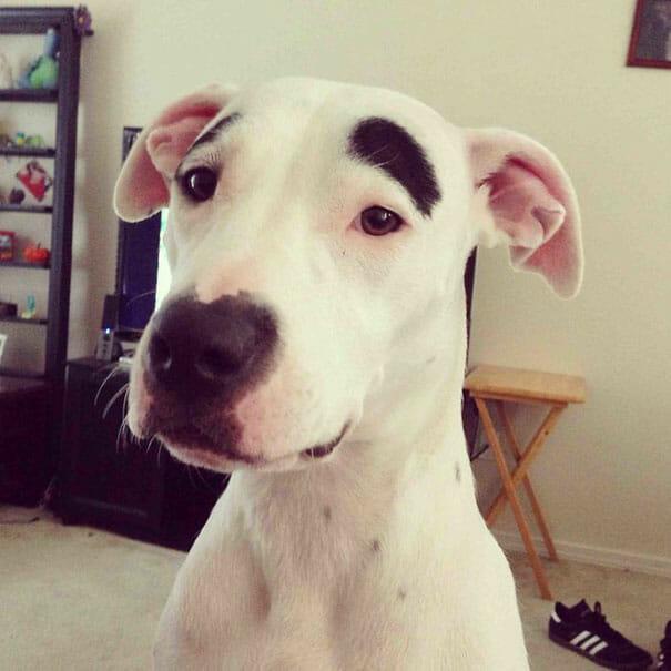 25 Animais simpáticos com desenhos engraçados em seus pelos