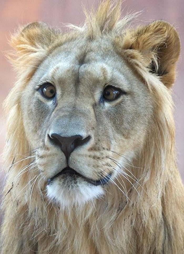 20 Animais adoráveis que são vesgos