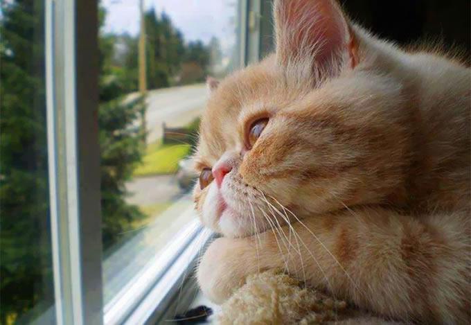 36 Gatos melancólicos esperando por seus donos na janela