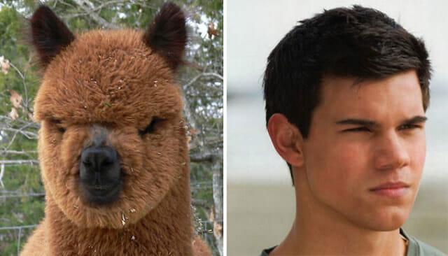 6 Comparações engraçadas de imagens parecidas