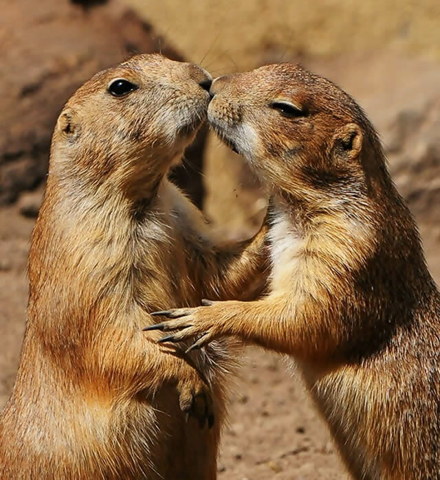 25 Imagens fofas de animais que não têm vergonha de demonstrar o seu amor
