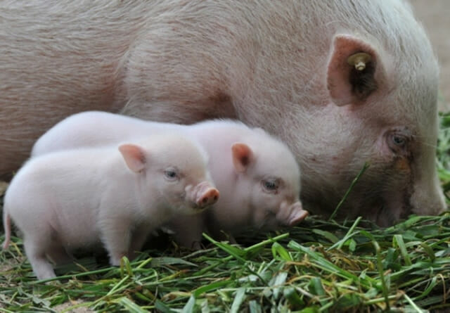 25 Imagens fofas de animais cuidando de seus filhotes