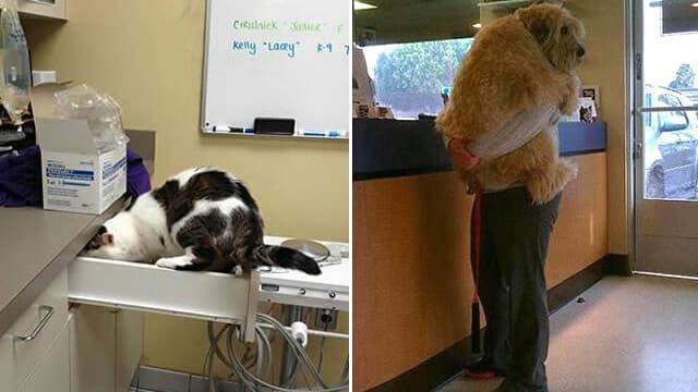 24 Animais que definitivamente odeiam ir ao veterinário