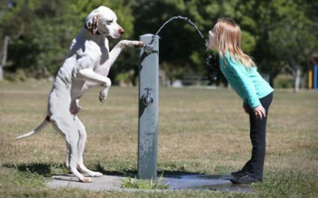 25 Imagens engraçadas de cães que pensam que são gente