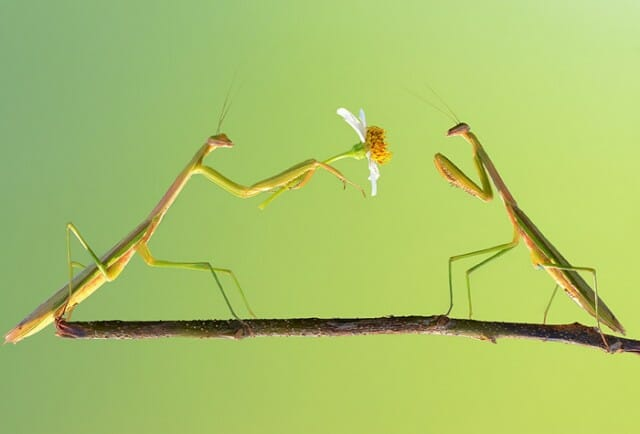 fotografias-macro-insetos