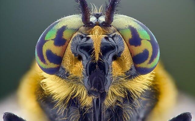 fotografias-macro-insetos_1