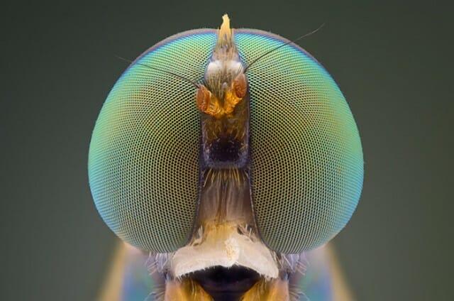fotografias-macro-insetos_2