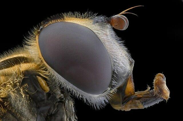 fotografias-macro-insetos_3