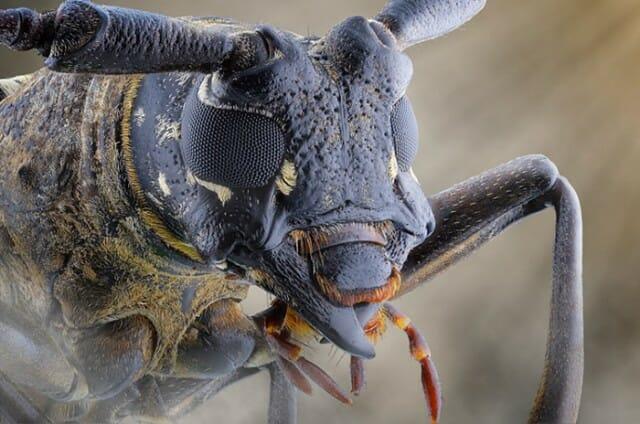 fotografias-macro-insetos_4