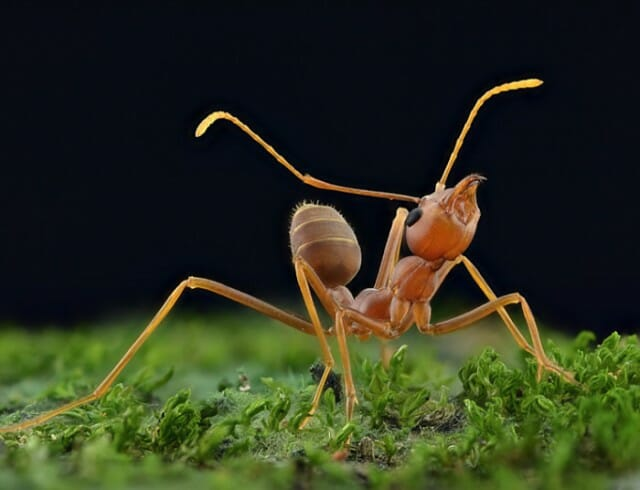 fotografias-macro-insetos_5