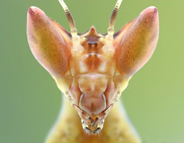fotografias-macro-insetos_9