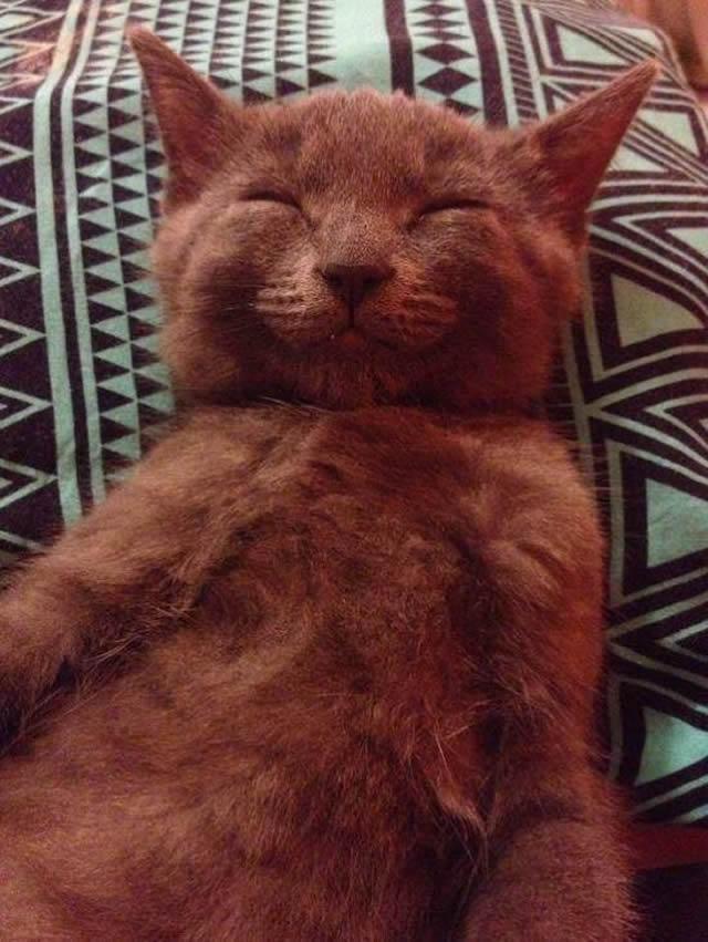 animais-mais-felizes-do-mundo_15