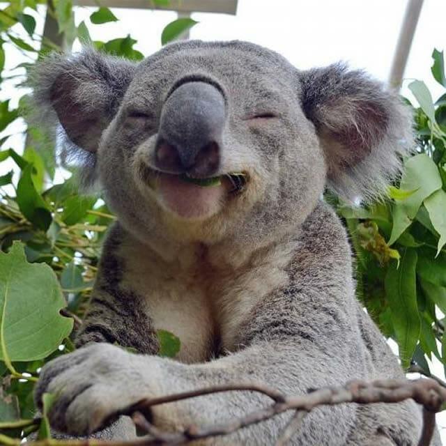 animais-mais-felizes-do-mundo_34