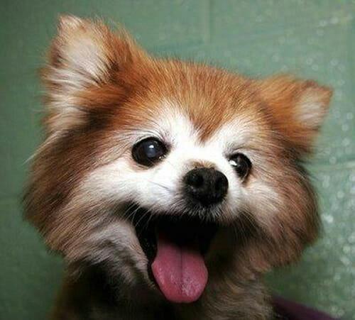 animais-mais-felizes-do-mundo_41