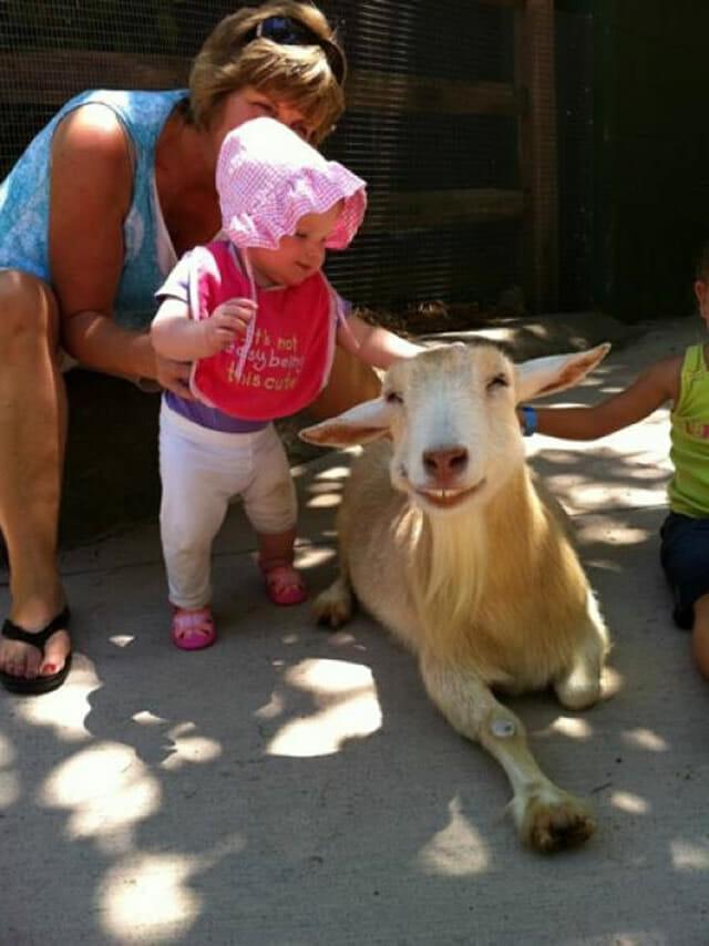 animais-mais-felizes-do-mundo_6