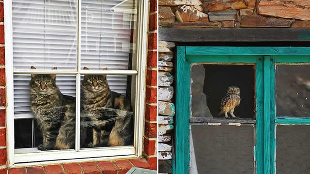15 Fotos perfeitas de animais olhando pela janela