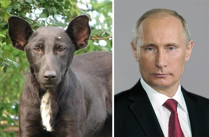 15 Imagens engraçadas de cães que são parecidos com alguma coisa