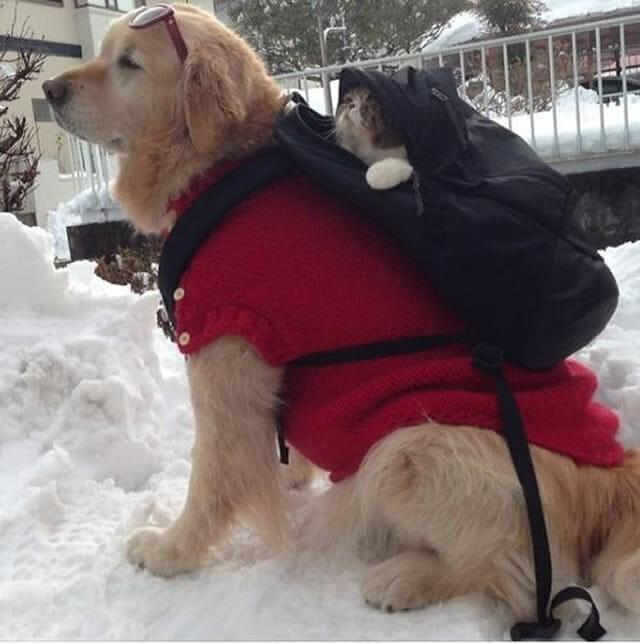 Cão e gato são grandes amigos e fazem tudo juntos (15 fotos)