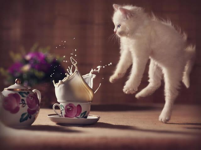 Pulo do gato: 17 Imagens superlegais de gatos no ar