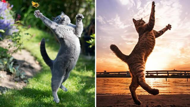 Resultado de imagem para liberdade gato