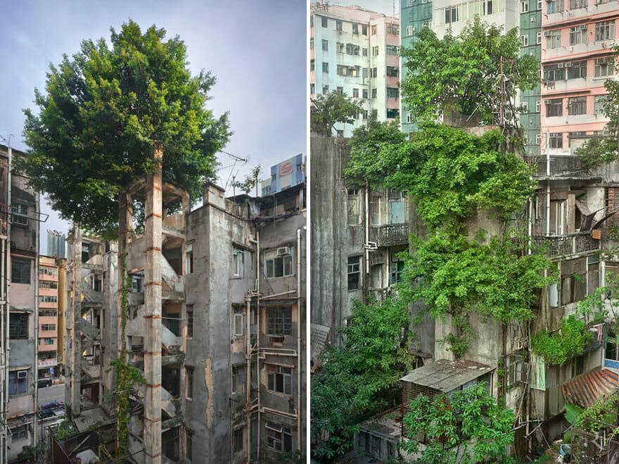 natureza-vs-civilizacao_2