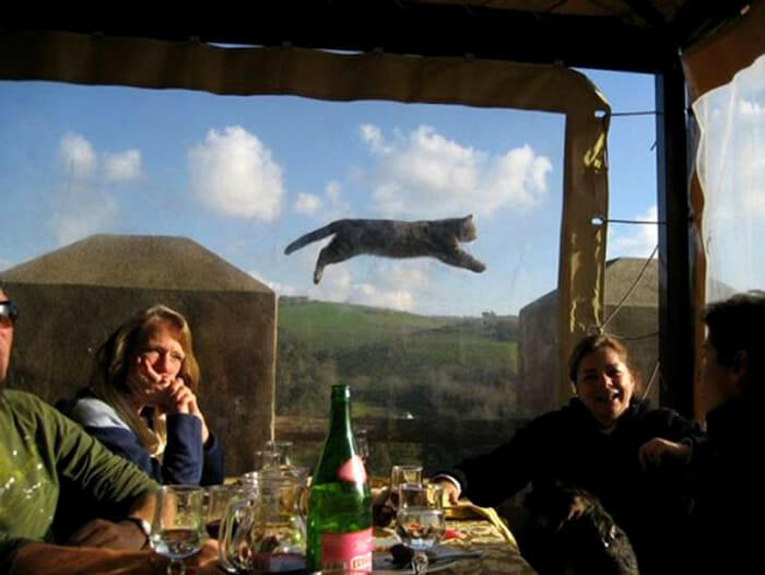 photobombs-por gatos_1