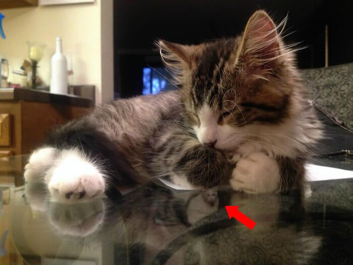 photobombs-por gatos_16