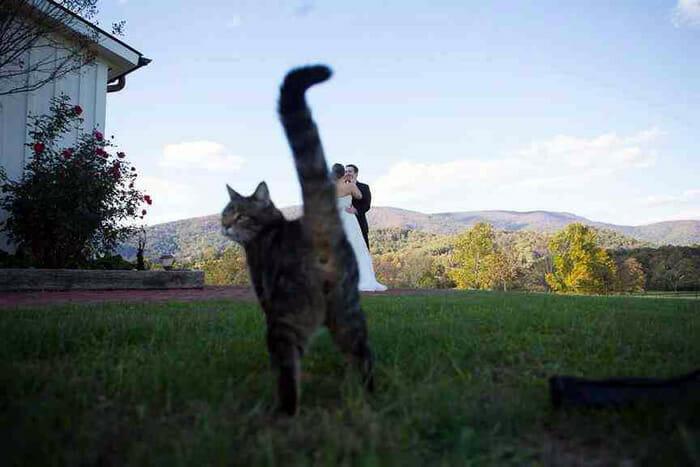 photobombs-por gatos_2