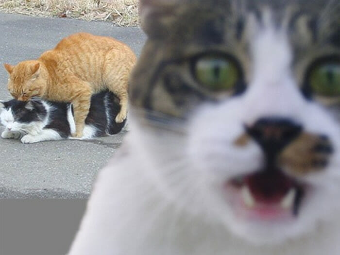 photobombs-por gatos_4
