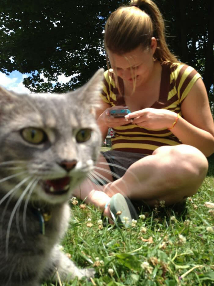 photobombs-por gatos_8