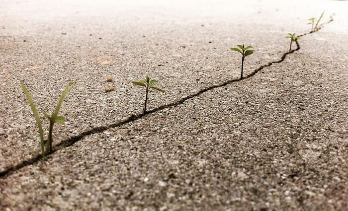 Persistentes: 23 Plantas que nasceram nos lugares mais improváveis