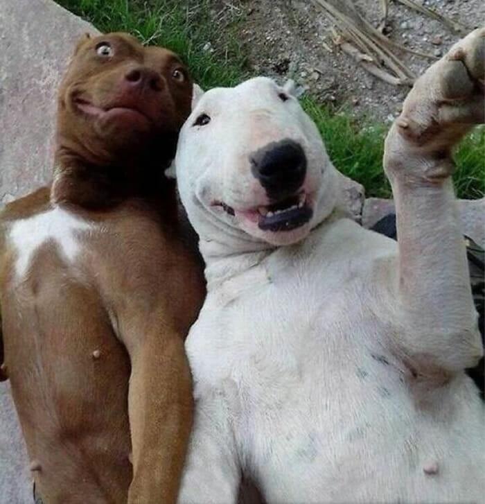 Selfies animais! 12 Fotos engraçadas de animais que parecem ter sido tiradas por eles mesmos