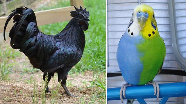 20 Animais lindos que têm cores inesperadas