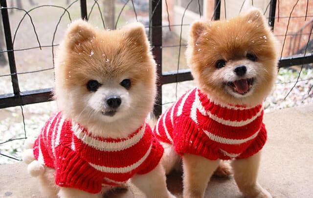 25 Animais gêmeos que estão perfeitamente sintonizados