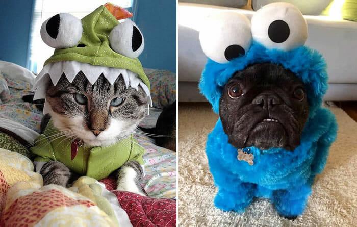 20 Animais que absolutamente odeiam suas fantasias