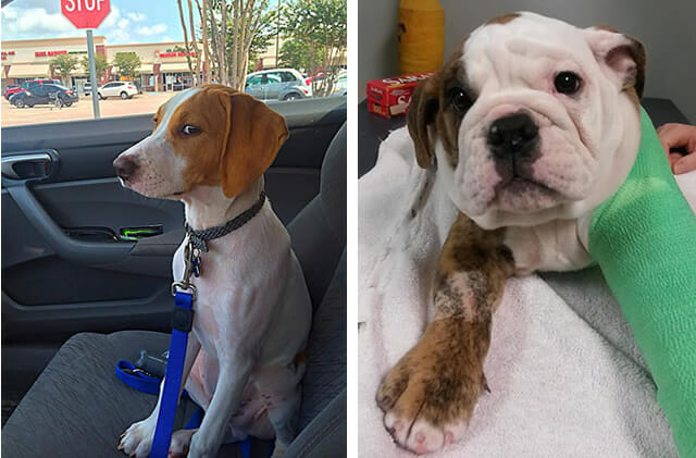 16 Animais que definitivamente odeiam ir ao veterinário - Parte II