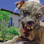 15 Cachorros tão feios, TÃO FEIOS, que chegam a ser lindos!