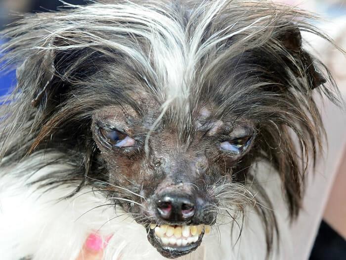cachorro-feio_14