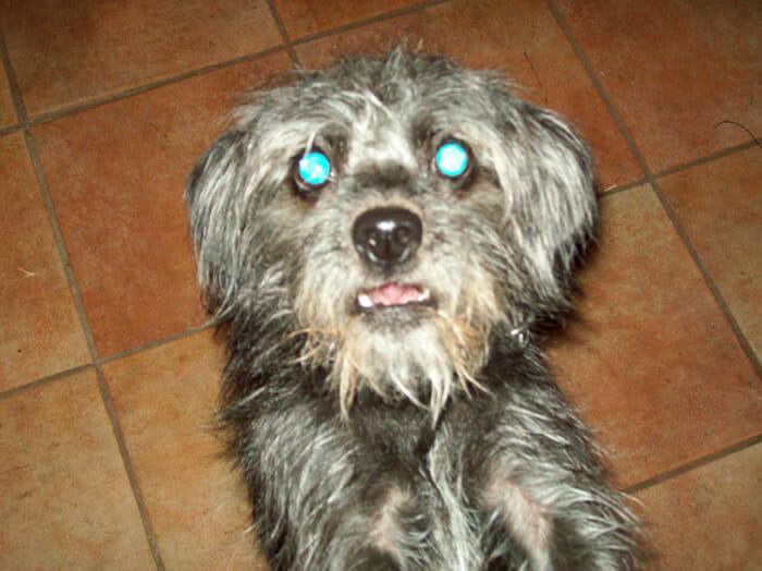 cachorro-feio_3