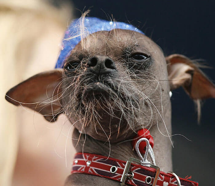 cachorro-feio_6
