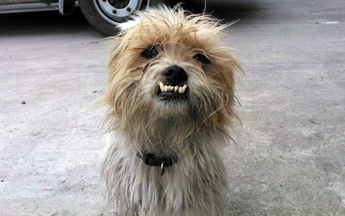 cachorro-feio_7