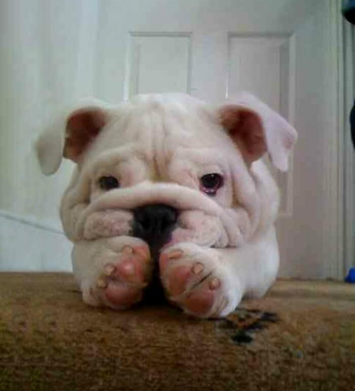 cachorro-feio_8